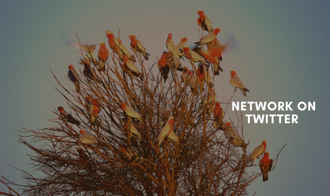 network on twitter
